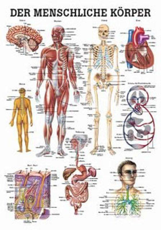 Anatomie Lehrtafeln - Der Menschliche Körper, , 70 x 100 cm, papier ...